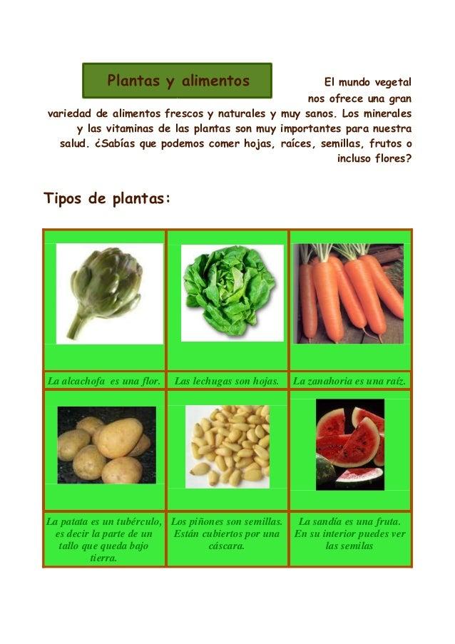 Las plantas usos for Para q sirven las plantas ornamentales