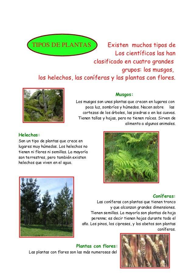 Las plantas usos for Cuantos tipos de arboles hay en el mundo