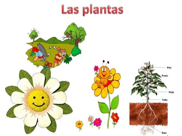Las plantas y animales for Clasificacion de las plantas ornamentales