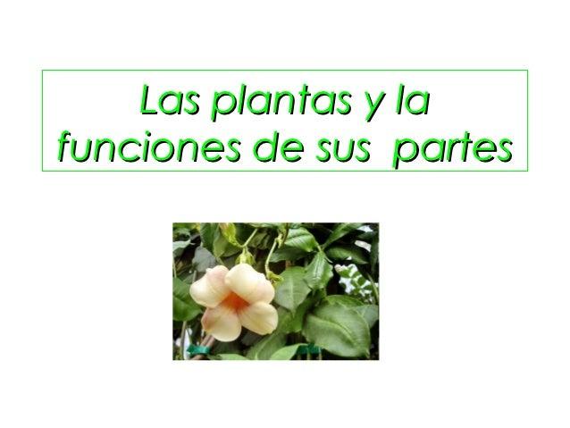 Las Plantas Y La Funciones De Sus Partes