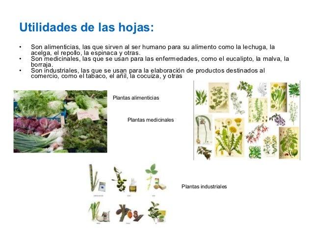 Las plantas y la funciones de sus partes for Para q sirven las plantas ornamentales