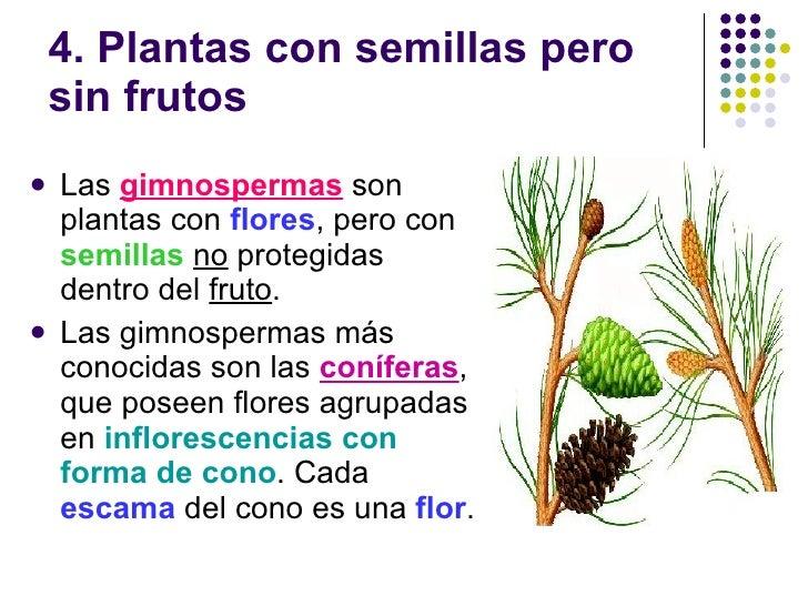 Las plantas y los hongos for Plantas sin semillas