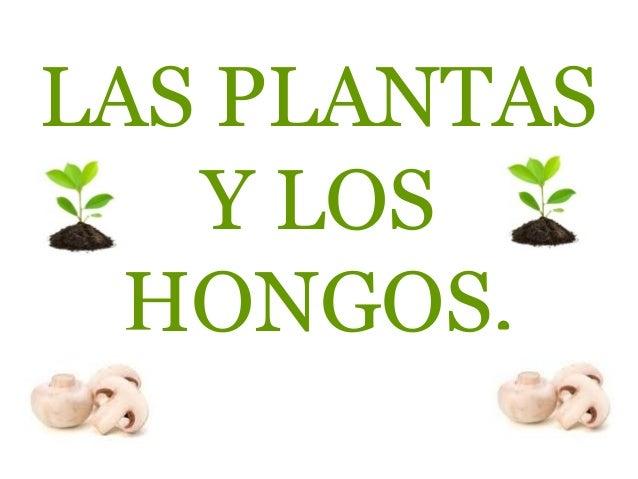 LAS PLANTAS   Y LOS  HONGOS.