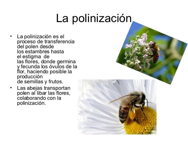 La polinización•   La polinización es el    proceso de transferencia    del polen desde    los estambres hasta    el estig...