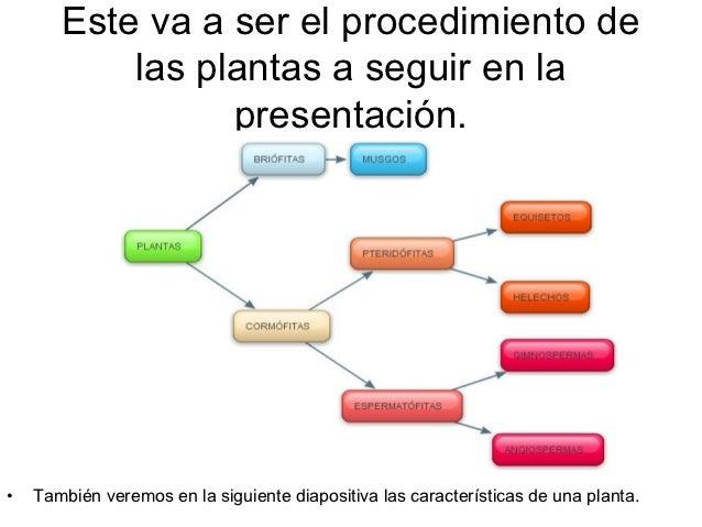 Este va a ser el procedimiento de           las plantas a seguir en la                 presentación.•   También veremos en...