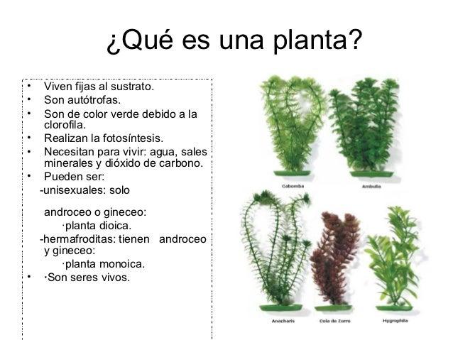 ¿Qué es una planta?•  Viven fijas al sustrato.•  Son autótrofas.•  Son de color verde debido a la   clorofila.• Realizan l...