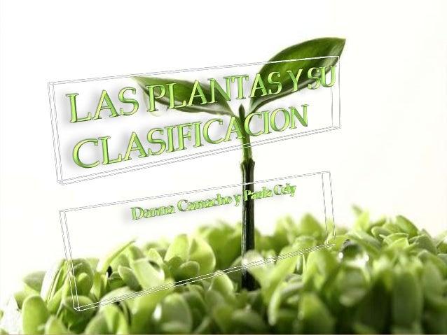   LA PLANTA  Importancia de las plantas/ Mapa conceptual  La clasificacion de las plantas 3.2 Plantas con flor 3.1 Pla...