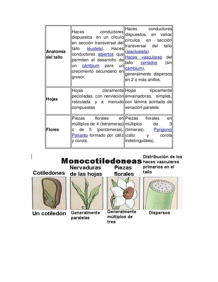 Las plantas y su estructura i