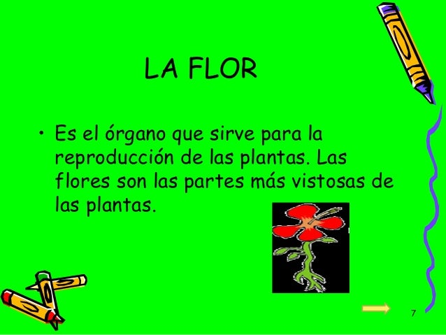 Las plantas y su glosario para ni os actividad extra for Que son las plantas ornamentales y para que sirven