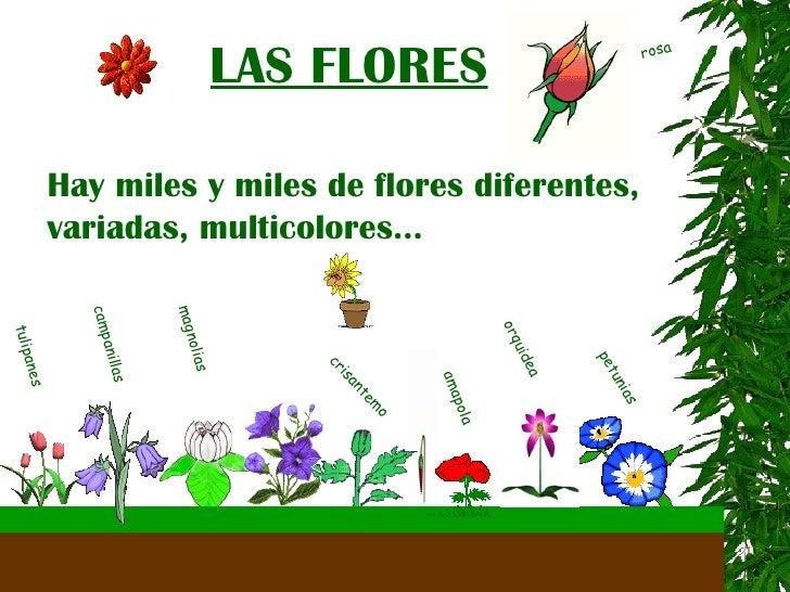 Imagenes de plantas y sus partes for Plantas de interior fotos y nombres