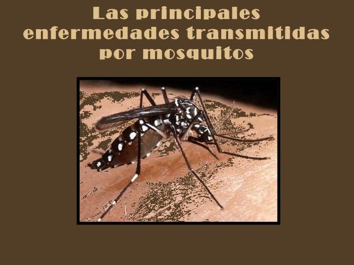 Las principales enfermedades transmitidas por mosquitos