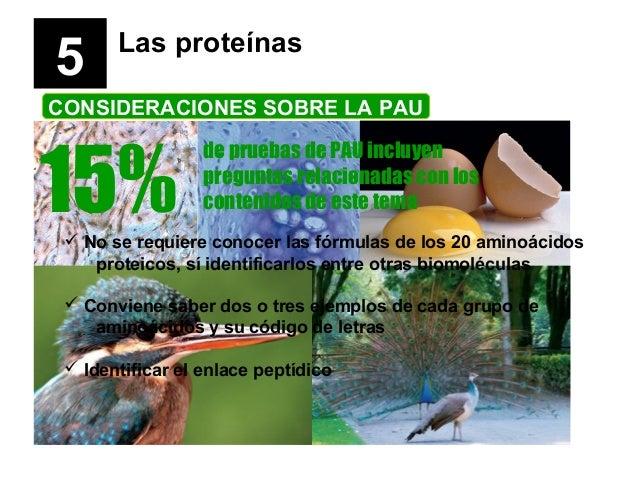 5  Las proteínas  CONSIDERACIONES SOBRE LA PAU  15%  de pruebas de PAU incluyen preguntas relacionadas con los contenidos ...