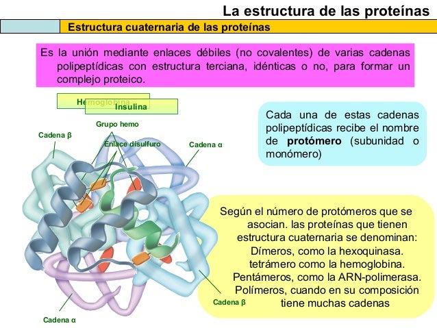 Las Proteínas 2013