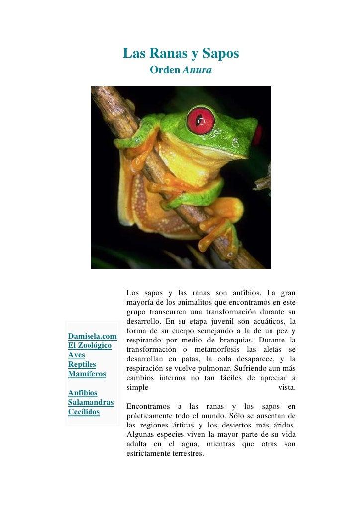 Las Ranas y SaposOrden Anura<br />Damisela.com El ZoológicoAvesReptilesMamíferosAnfibiosSalamandrasCecílidosLos sapos y la...