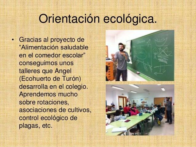 Huerto escolar ecol gico Rotaciones de cultivos ecologicos