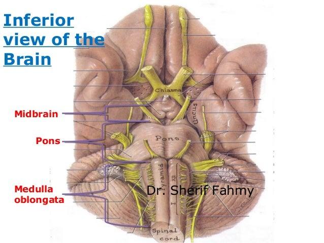 Last 4 Cranial Nerves Anatomy Of The Neck