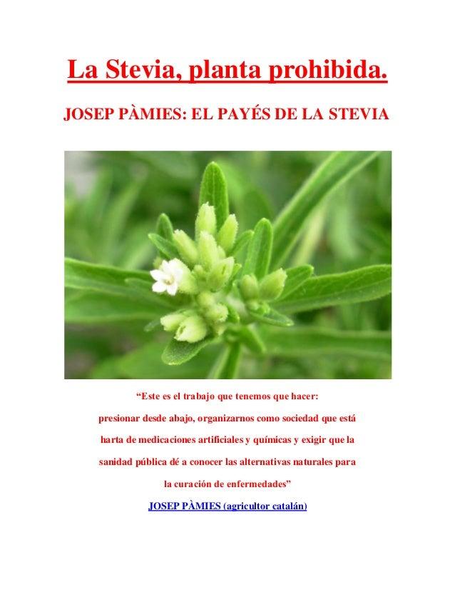"""La Stevia, planta prohibida. JOSEP PÀMIES: EL PAYÉS DE LA STEVIA """"Este es el trabajo que tenemos que hacer: presionar desd..."""