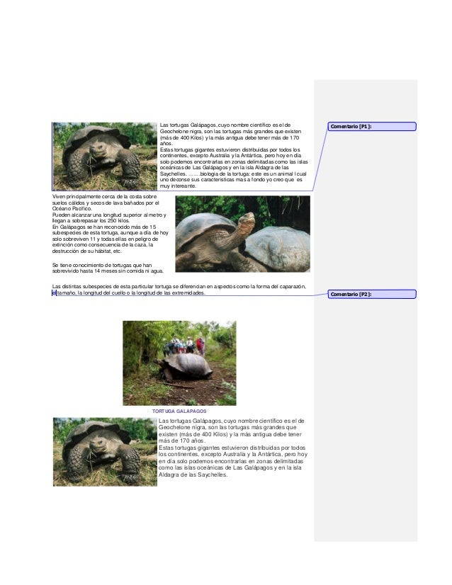 Las tortugas Galápagos, cuyo nombre científico es el de           Comentario [P1]:                                        ...