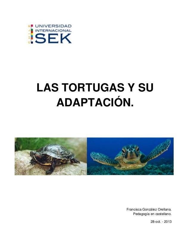 LAS TORTUGAS Y SU ADAPTACIÓN.  Francisca González Orellana. Pedagogía en castellano. 28-oct. - 2013