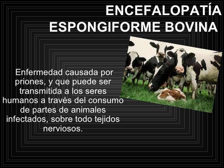 ENCEFALOPATÍA ESPONGIFORME BOVINA   Enfermedad causada por priones, y que puede ser transmitida a los seres humanos a trav...