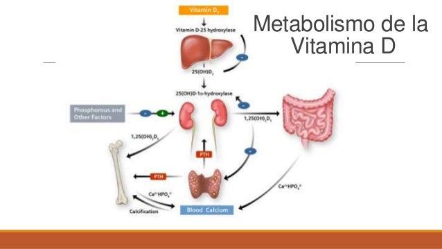 Cómo aumentar el metabolismo una pregunta que no necesita hacer más