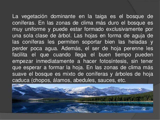 La taiga for Arboles de hoja perenne para clima continental