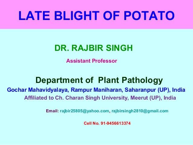 LATE BLIGHT OF POTATO DR. RAJBIR SINGH Assistant Professor Department of Plant Pathology Gochar Mahavidyalaya, Rampur Mani...