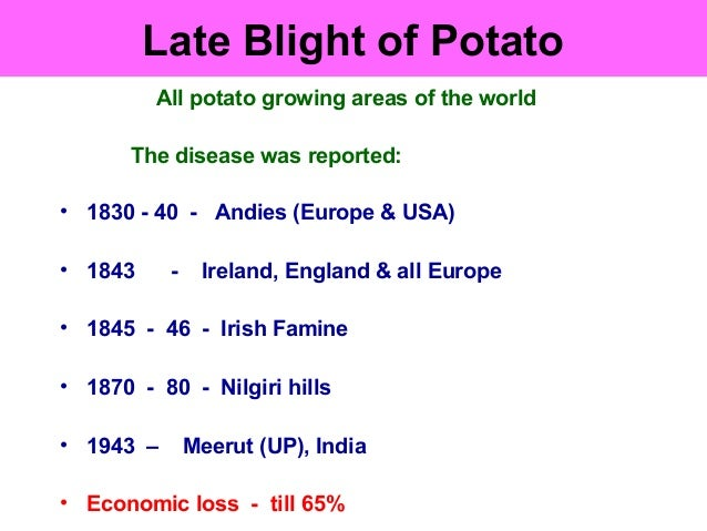 Late Blight of Potato All potato growing areas of the world The disease was reported: • 1830 - 40 - Andies (Europe & USA) ...