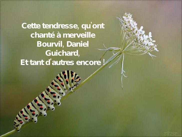 Cette tendresse, qu'ont chanté à merveille Bourvil, Daniel Guichard, Et tant d'autres encore !