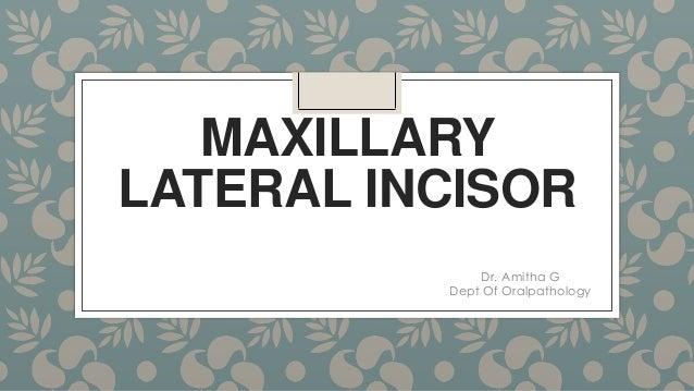 MAXILLARY LATERAL INCISOR Dr. Amitha G Dept Of Oralpathology