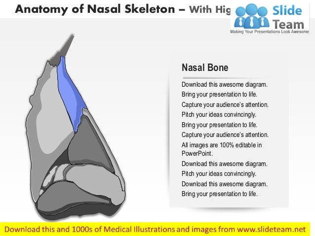 Lateral View Of External Nose Anatomy Of Nasal Skeleton Medical Image