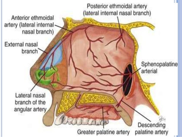 Lateral Wall Of Nose
