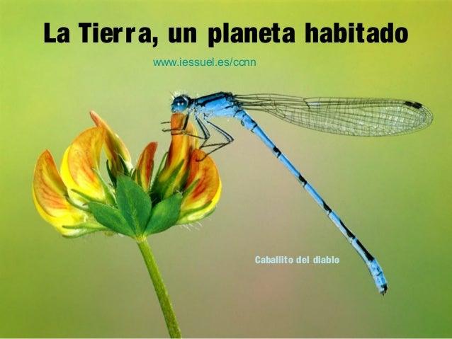 La Tierra, un planeta habitado Caballito del diablo www.iessuel.es/ccnn