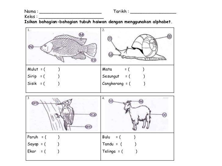 Latihan Bhgn Badan Haiwan