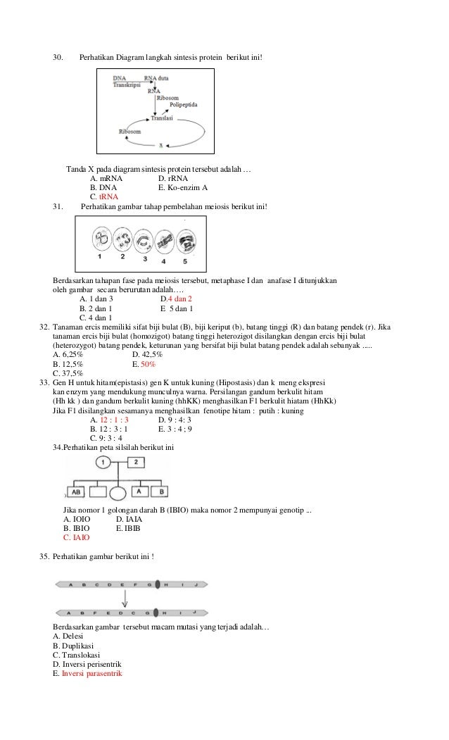 Latihan soal biologi sma ma un 2013 6 30 perhatikan diagram langkah sintesis protein berikut initanda x pada diagram sintesis protein tersebut adalah ccuart Image collections