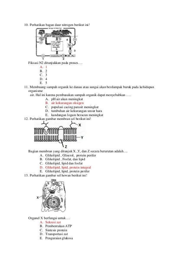 Biologi smama soal try out un biologi sma ma tahun 2013 paket 2 biologi smama diagram sintesis protein secara berurutan gallery how to ccuart Image collections