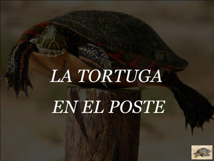 LA TORTUGA  EN EL POSTE