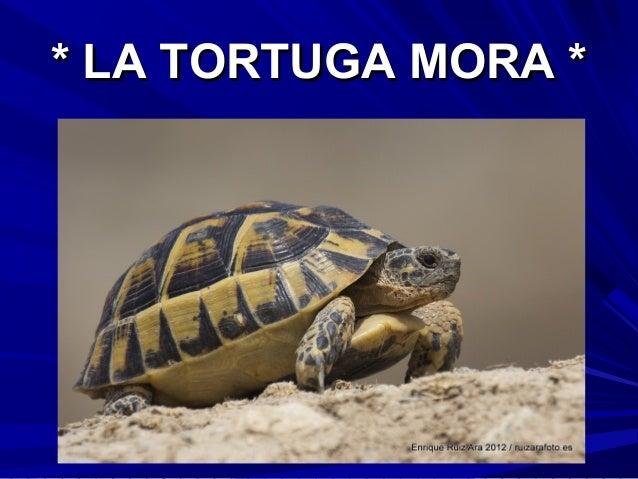 * LA TORTUGA MORA *