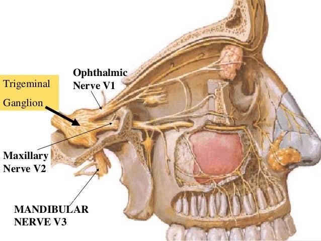 facial & trigeminal nerve 2, Human Body