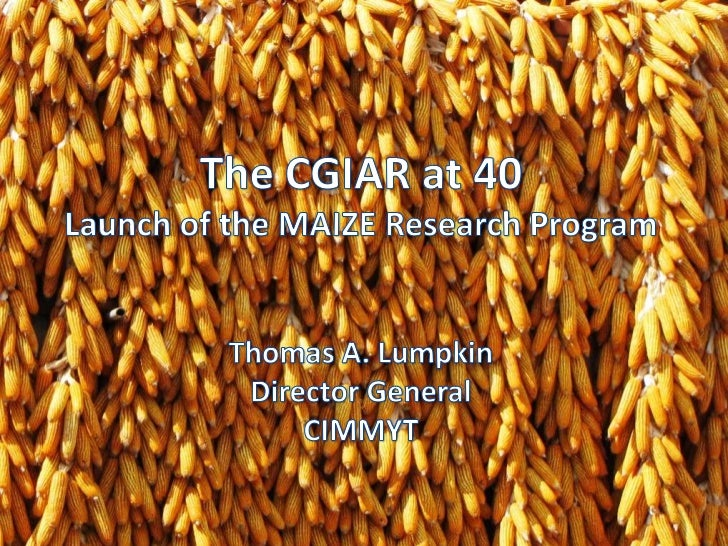 The CGIAR at 40<br />Launch of the MAIZE Research Program<br />Thomas A. Lumpkin<br />Director General<br />CIMMYT<br />