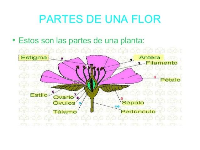Laura las plantas for Partes de una griferia de ducha