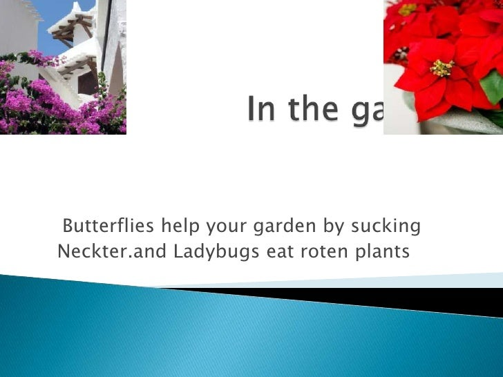 In the garden<br />Butterflies help your garden by sucking <br />Neckter.and Ladybugs eat roten plants <br />