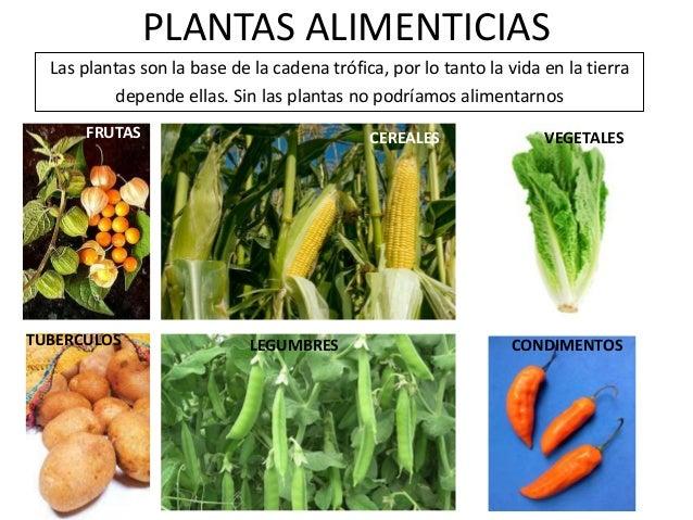 La utilidad de las plantas for 5 nombres de plantas ornamentales