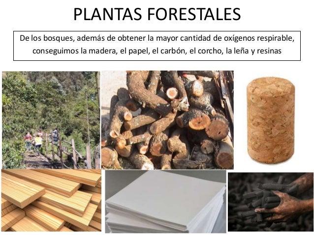 La utilidad de las plantas for Plantas forestales