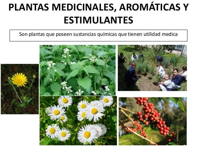 La utilidad de las plantas for Plantas ornamentales y medicinales