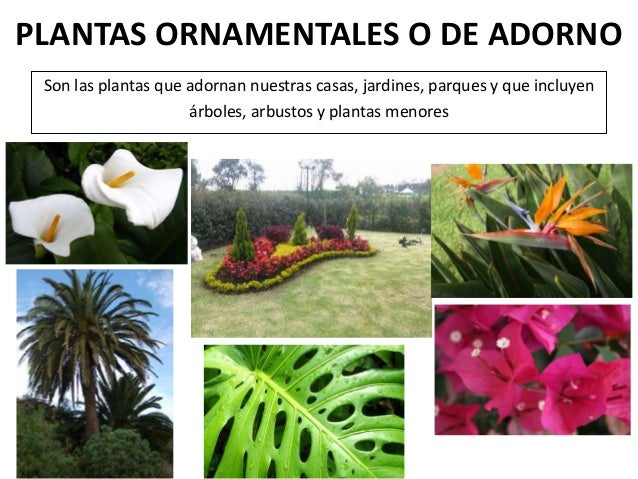 La utilidad de las plantas for Cuales son las plantas ornamentales y sus nombres