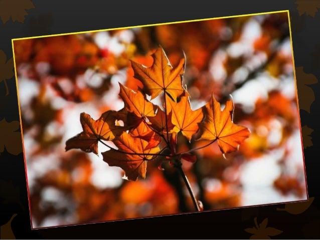 L'automne Slide 2