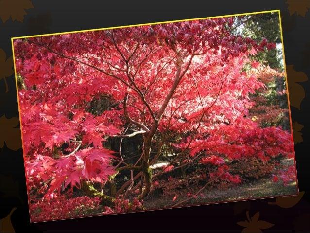 L'automne Slide 3