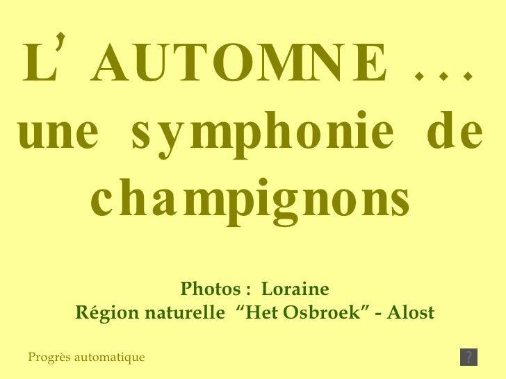 """Photos :  Loraine Région naturelle  """"Het Osbroek"""" - Alost Progrès automatique L' AUTOMNE ... une symphonie de champignons"""