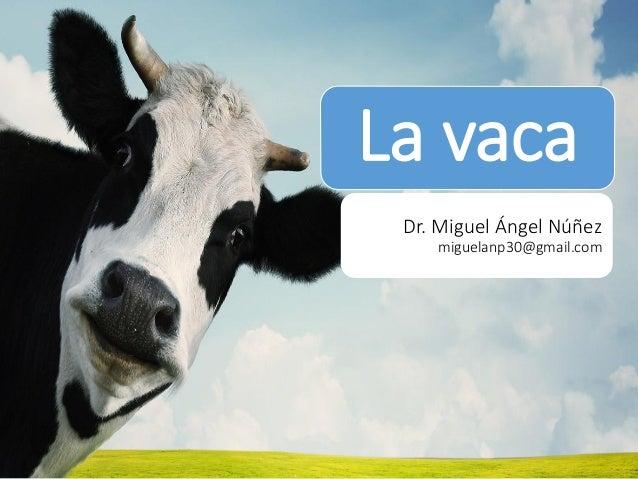 La vaca  Dr. Miguel Ángel Núñez miguelanp30@gmail.com